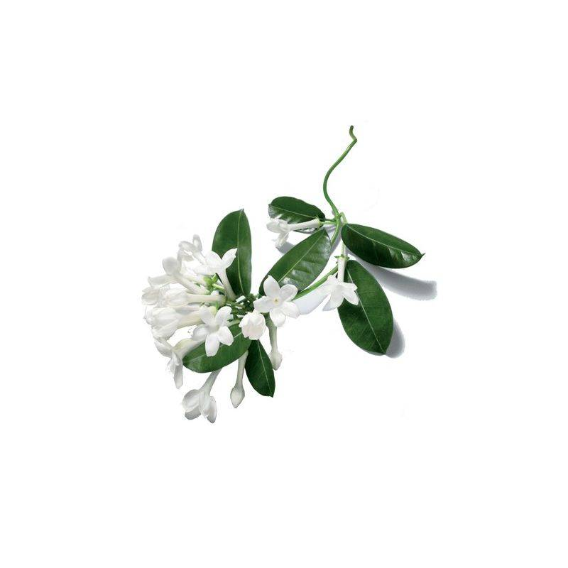 SPA GARDENIA WOOD SCRUB